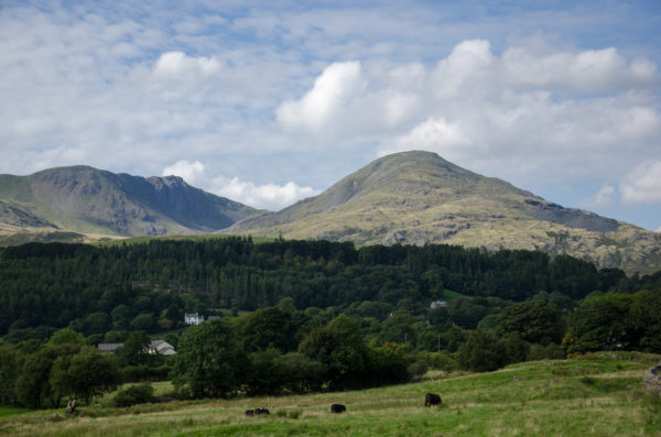 Coniston Old Man - the rounded peak on the right of the picture and Dow Crags to the left.